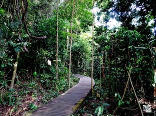 SG-Tree Top Walk02