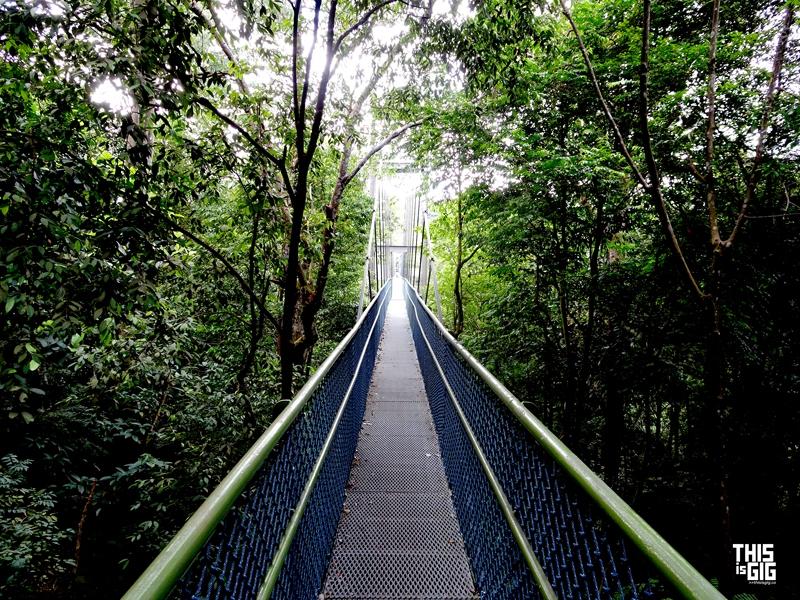SG-Tree Top Walk10