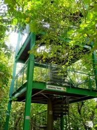 SG-Tree Top Walk16